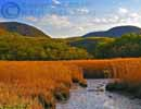 iona%20island%20marsh%20(13x19)%20-%20photoart%20-%20bear%20mountain%20state%20park%20-073_edited-1.jpg